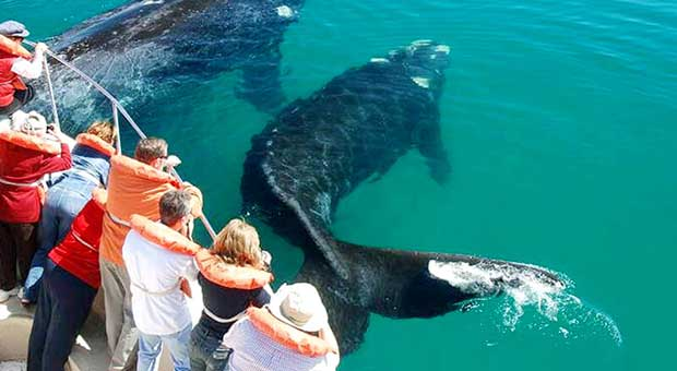 navigation and whale watching in argentina