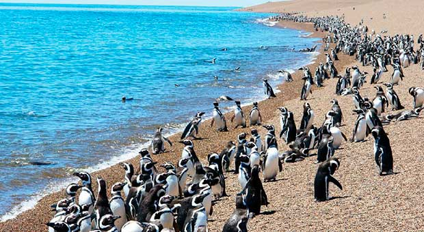 penguins watching peninsula valdes north tour argentina travel agent