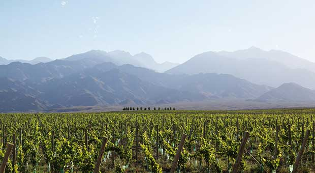 uxury vineyard hotel mendoza argentina travel agency