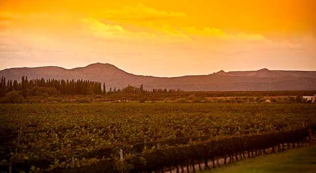 vineyard hotel view mendoza argentina travel agency