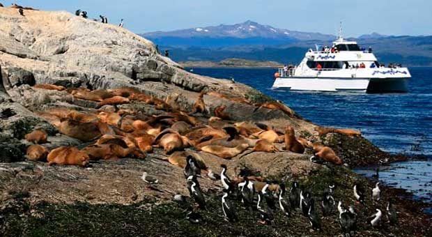 wildlife watching ushuaia patagonia argentina travel agent