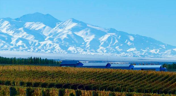 Wineries Tour Mendoza Argentina