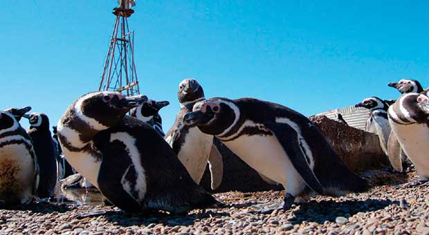 penguins watching peninsula valdes argentina travel agent