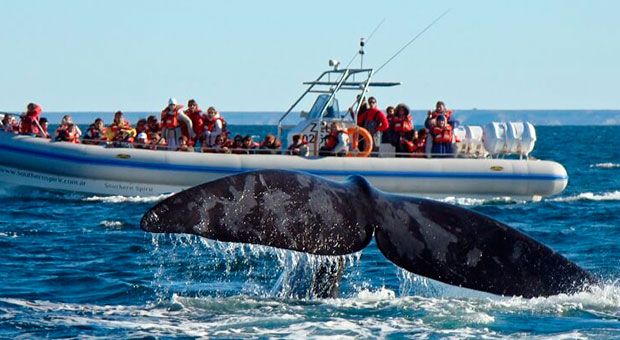 peninsula valdes whales tour puerto madryn argentina travel agent