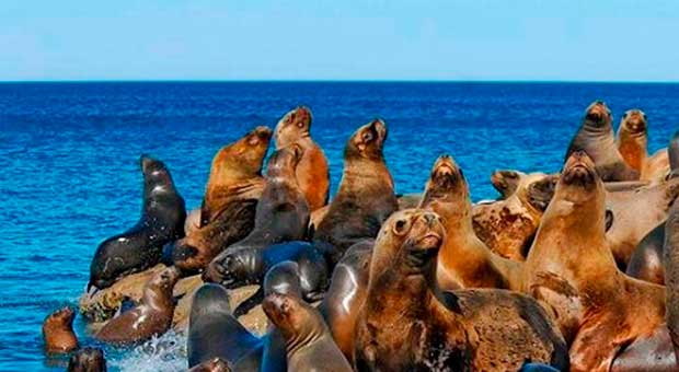 wildlife watching puerto madryn argentina travel agent