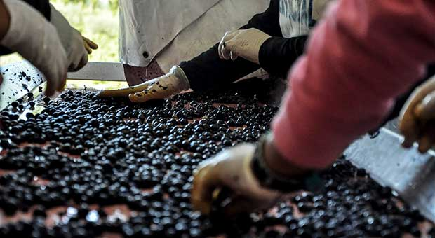 wine tour mendoza argentina travel