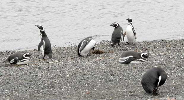 penguins and trek ushuaia